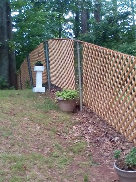 easy and cheap chain link fence covered with trellis pinterest