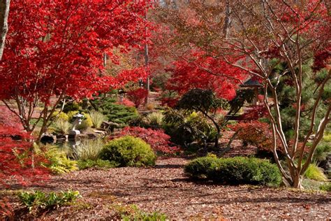 Gibbs Garden by Japanese Maples Festival Blooms At Gibbs Gardens