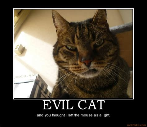 Evil Cat Meme - cats can inadvertently cause suicide big ten science