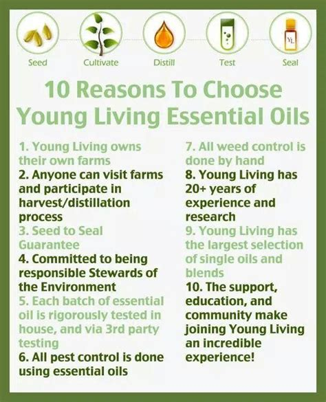 google images young living essential oils 1000 images about oily things on pinterest soaps