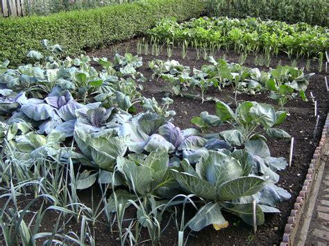 self sustaining garden top tips for a self sufficient garden
