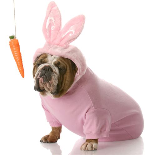 easter puppy 21 adorable animals dressed up for easter cus