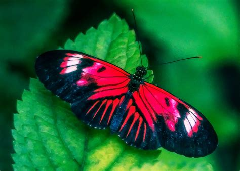 lynn wiezycki photography butterfly world butterflies