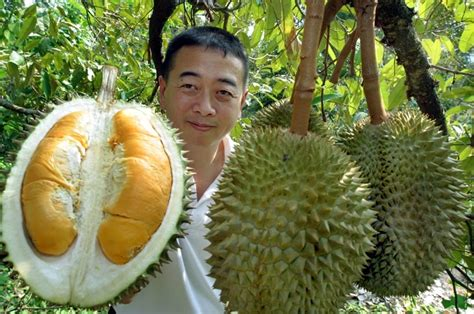 tree that smells like oranges how to and eat durian fruit the washington post