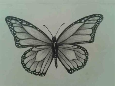 butterfly sketch butterflies drawings sketch drawings