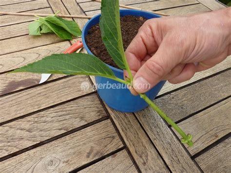 Quand Planter Les Hortensias by Ou Planter Hortensia