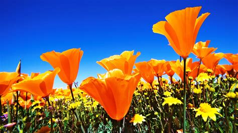 nice flower wallpaper boomwallpapercom hd images d flower