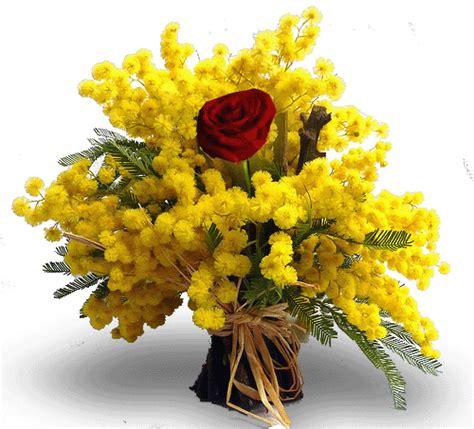 mazzo di fiori con mimose bouquet di mimose invio fiori con le viaggiano