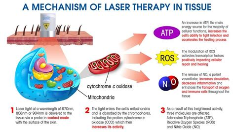 low level laser light therapy blog