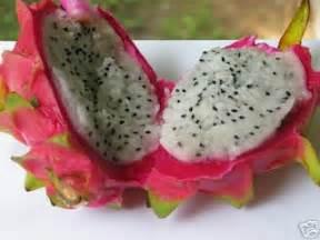 Naga Asam Manis macam jenis buah naga pitayathedragonfruit