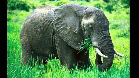 imagenes de animales herbivoros y carnivoros animales carnivoros herbivoros y omnivoros youtube