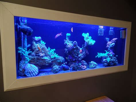 wall aquarium 10 amazing aquariums submitted by our users nualgi aquarium