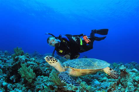 dive packages scuba diving in cozumel resorts packages caradonna