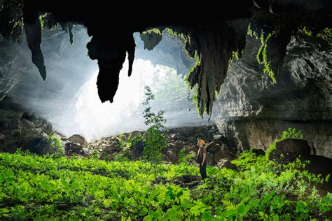 cave plants interview john spies magnificent photos reveal the