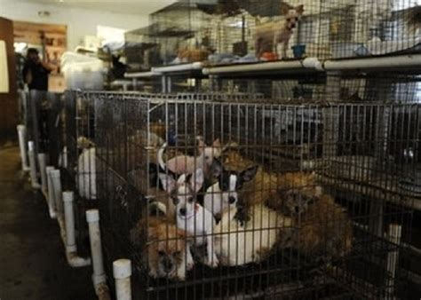 are puppy mills puppy mill dogs experience freedom for time fellowship of the minds