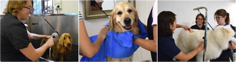 grooming school dogue grooming school enquire now