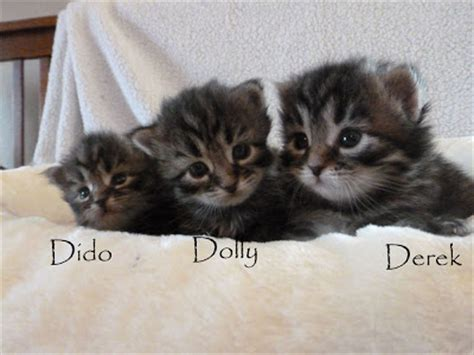 theme names for litter of puppies prekrasne siberian cats 2011 08 28