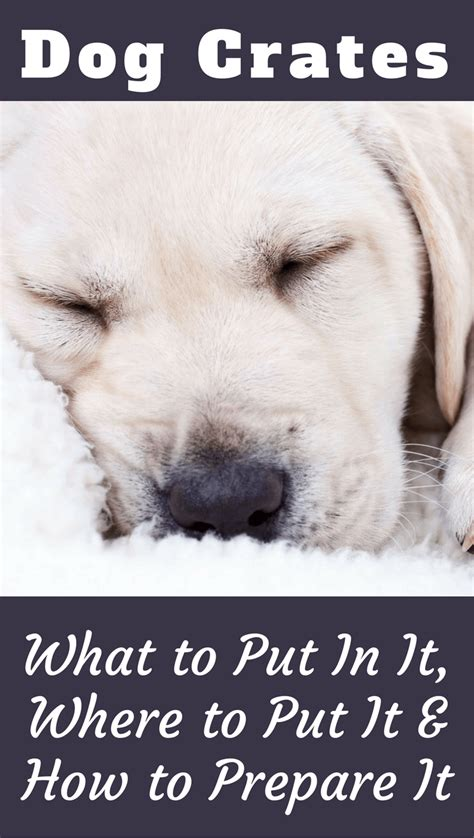 what to put in puppy crate at what to put in a crate where to put it how to get it prepared