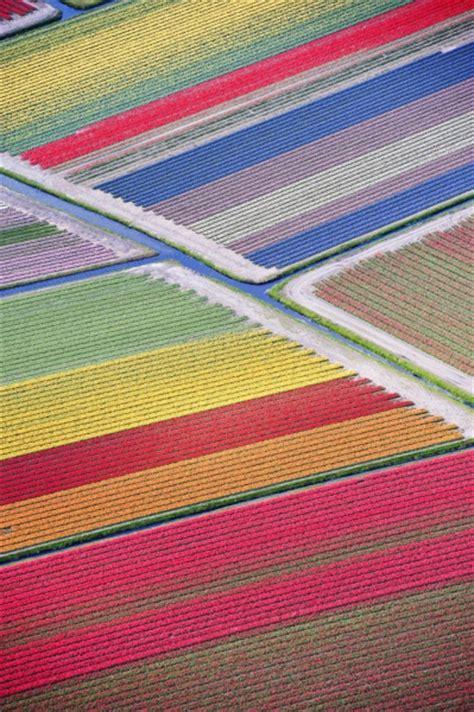 fiori dall olanda olanda lo spettacolo dei tulipani in fiore dall alto