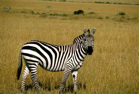 Free Pictures - download good quality images of Wild Animals