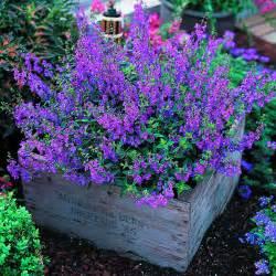 Purple Flower Garden Icangarden Gardening Resource Site