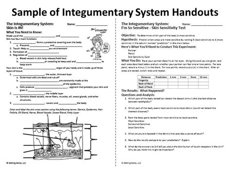 Integumentary System Worksheet Answers by 28 Integumentary System Worksheet The O Jays The