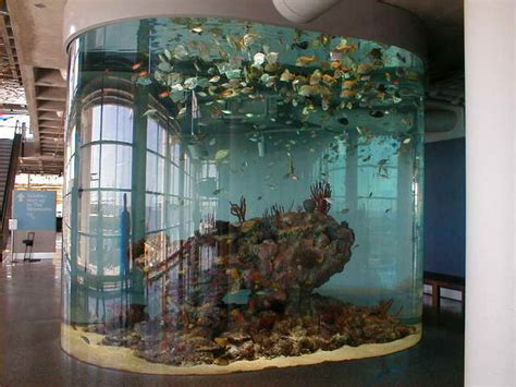 indoor architectural cool fish tank designs ideas how to