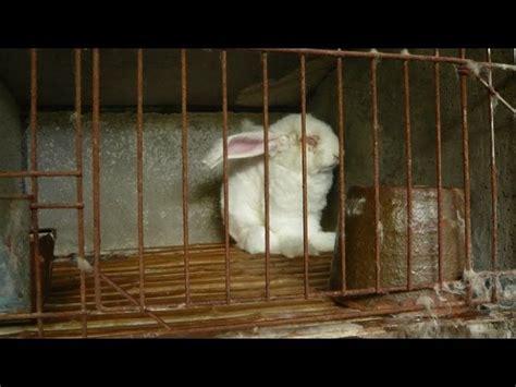 coniglio in gabbia anche lacoste dice basta all angora lifegate