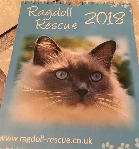 ragdoll rescue ragdoll rescue