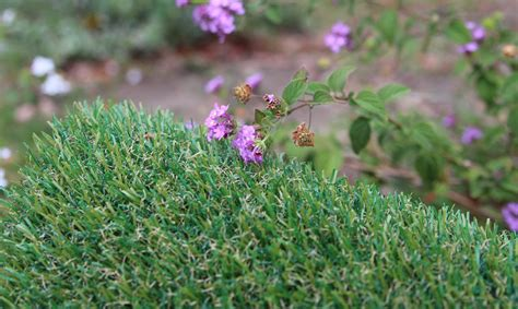 grass for dogs grass for dogs artificial grass synthetic turf