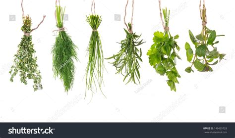 hanging bunches of fresh spicy herbs isolated on white fresh herbs hanging isolated on white stock photo
