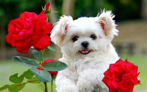 google images puppies cute puppies google search cute animals pinterest