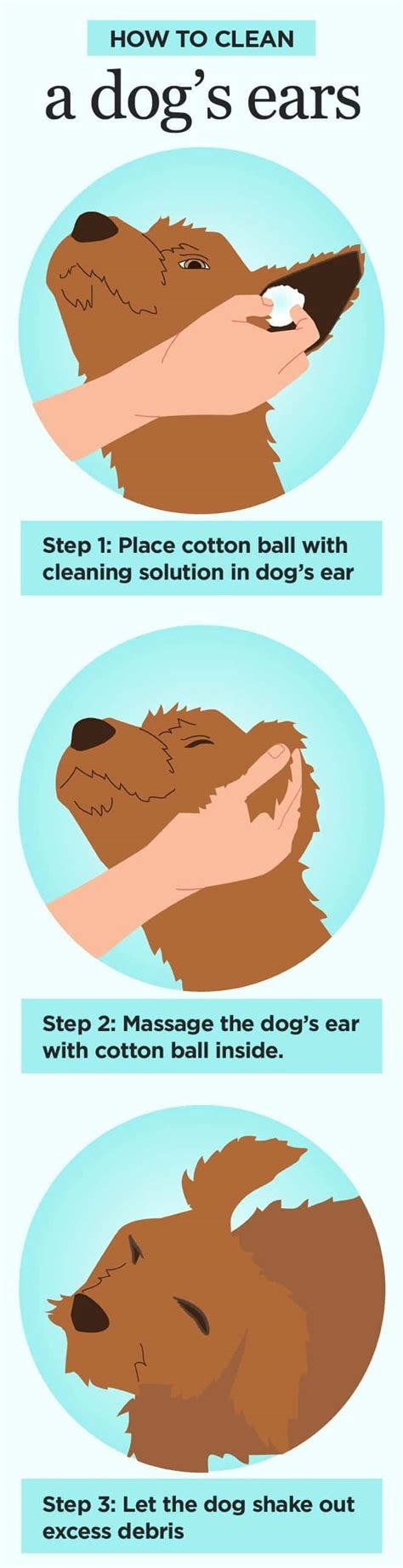 ear wash for dogs how to clean dogs ears step by step for healthy ears