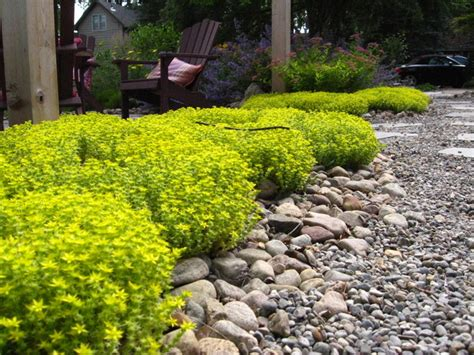 drought tolerant plants traditional landscape other metro by genus loci ecological