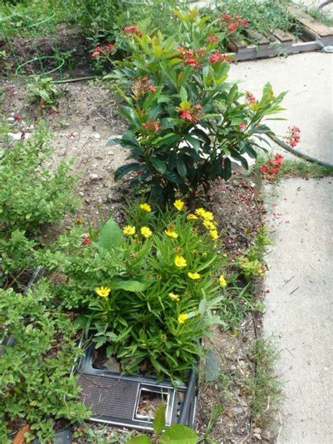 Backyard Naturalist by Huevos Rancheros Backyard Naturalist Report May 12