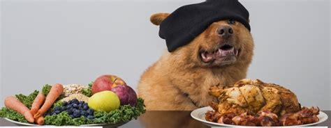 alimentazione vegetariana per cani il mio pu 242 mangiare il sedano consigli utili