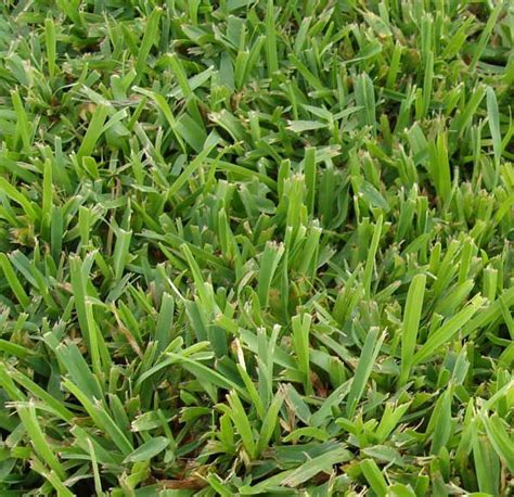 type of grass for garden 5 best grass types for arizona lawns