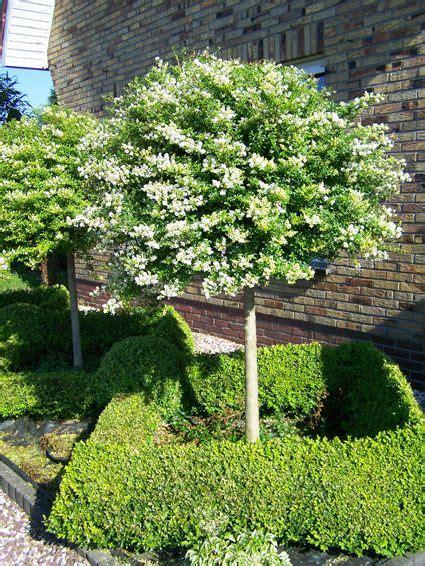 Veranda Tree by Rozenboompjes Zoeken Veranda Patio Tuin