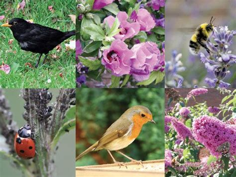 imagenes de jardines con animales verdeesvida los animales m 225 s 250 tiles del jard 237 n