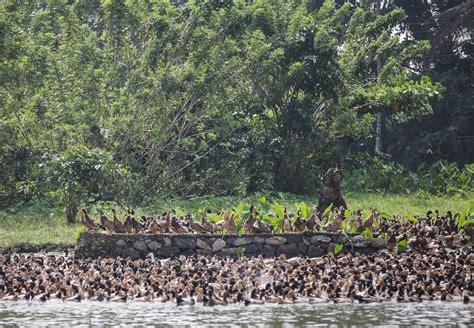 1325243752 backwaters du kerala a les backwaters du kerala tirawa blog