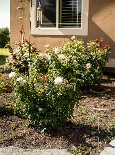 weed killer for flower beds how to get a weed free flower bed