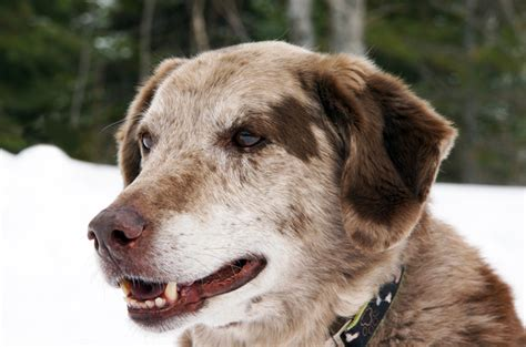 comfortable temperature for dogs how to keep senior dogs comfortable this winter