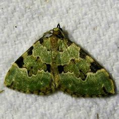 how to keep moths away from front door 1000 images about moths and butterflies on