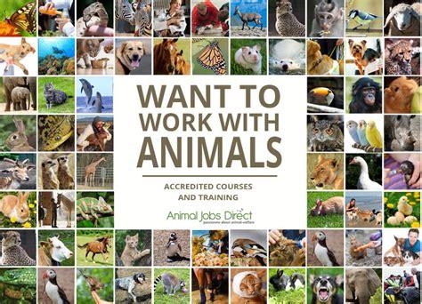 animal careers work with animals at animal welfare wildlife and