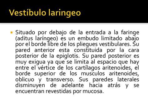 vestibulo laringeo anatomia de la laringe