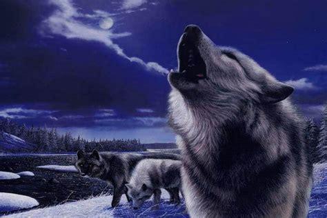 fondos de pantalla de lobos en movimiento fondos de pantalla fondo de escritorio lobos