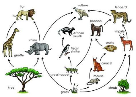 food webs/chains biomespiggott