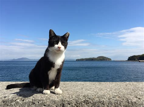 Sea Of Cats manabe shima island cat island in the seto inland sea