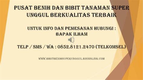 Bibit Kelengkeng Unggulan 0852 8121 2470 alamat penjual bibit kelengkeng merah