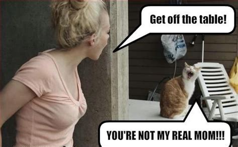 Youre Not My 3 by You Re Not My Real Cat Macros